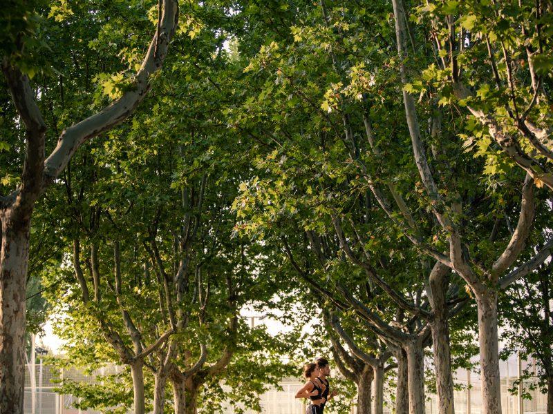 pareja corriendo en la arboleda
